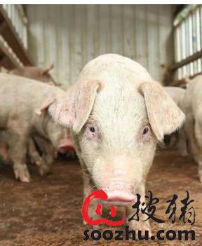 蓝耳病的跨场传播:空间临近与猪只运输那个影响更大?